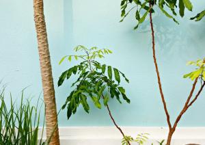 The best artificial plants in Australia