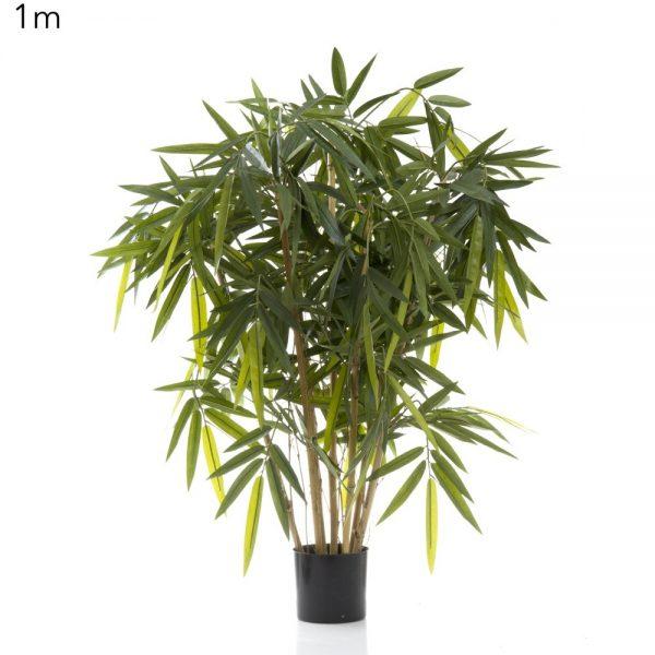 Bamboo Tree 1mt
