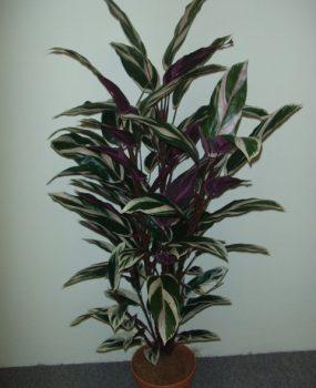Maranta Plant 1.2mt with realistic artificial foliage