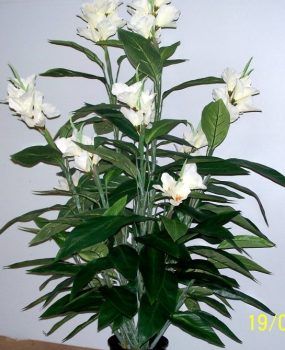 Artificial Canna Lilies 1.2mt double potted White – Silk Trees and Plants