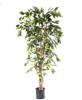 Artificial Ficus Tree 1.7mt on natural timber trunks – realistic foliage