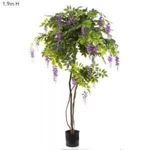 Wisteria Tree Purple 1.9m