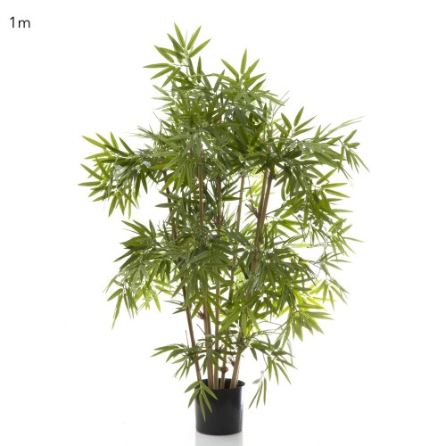 Japanese Bamboo Tree 1m