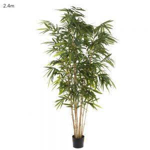 Bamboo Tree 2.4mt