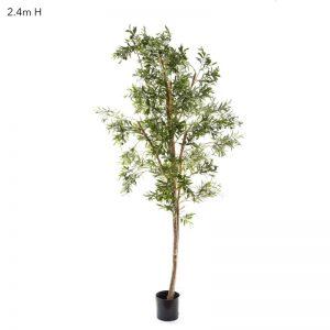Olive Tree 2.4mt on natural timber stem