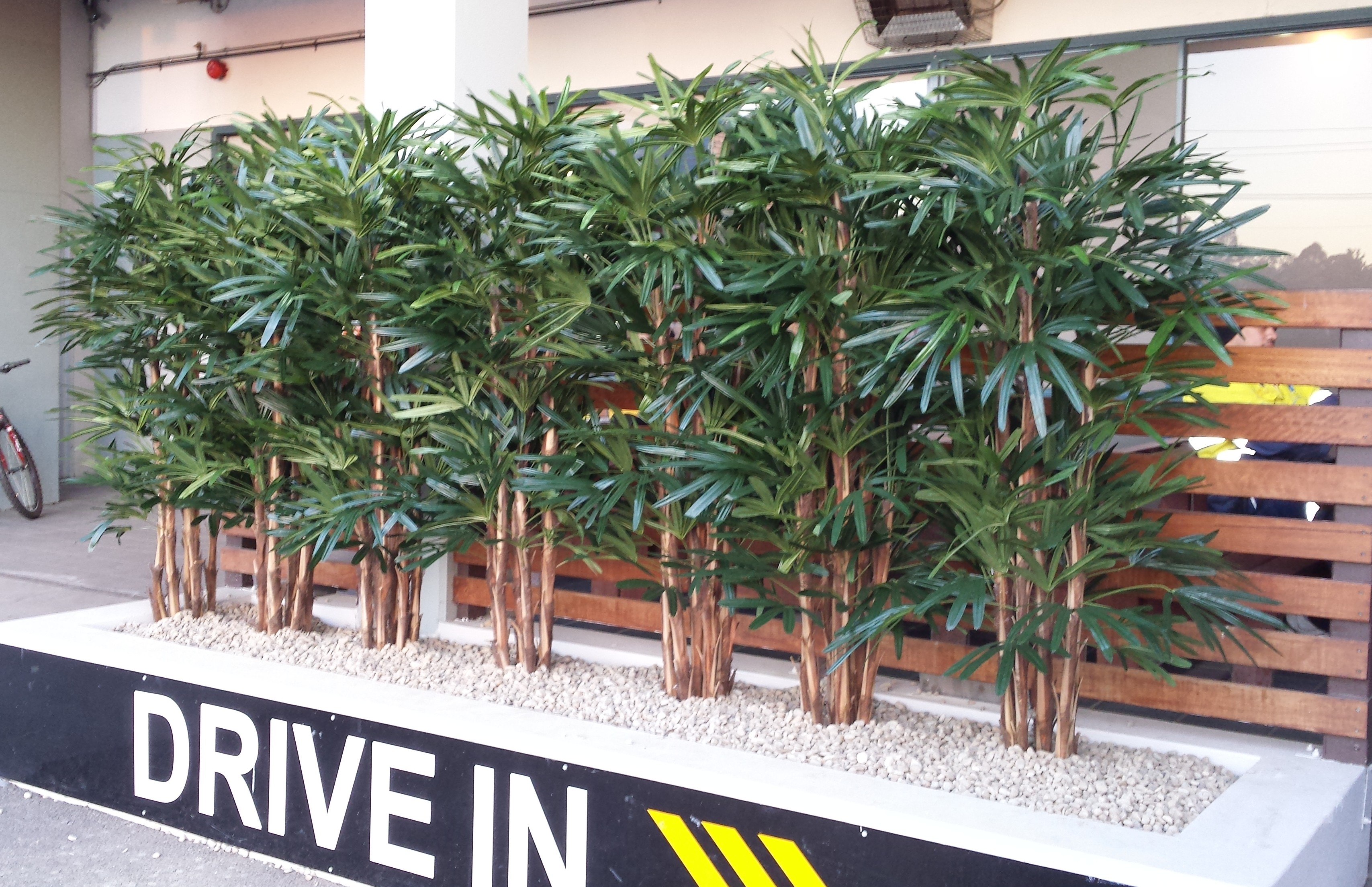 The First Planter Box Is At The Front Entrance To The Cambeltown Hotel,  Daniel Used Seven 2.4m Raphis Palms And Filled The Planter Box With Stones,  ...