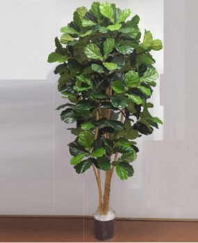 Artificial Fiddle Leaf Tree 2mt on real timber with 372 realistic lvs