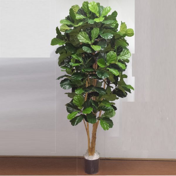 Fiddle Leaf Tree 2mt