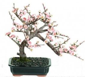 Artificial Cherry Bonsai Tree 38cm Pink in Bonsai pot