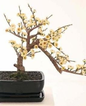Artificial Bonsai Cherry Tree 38cm Cream in Bonsai pot