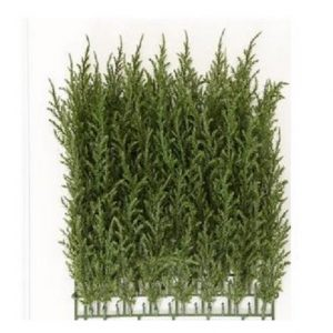 Artificial Cyprus Wall Mat 30cm  with realistic two tone foliage