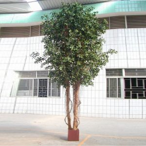 Artificial Ficus Retusa 3mt Giant Tree