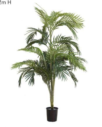 Areca Palm 1.2mt
