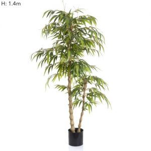Bamboo Buddha Tree 1.5mt