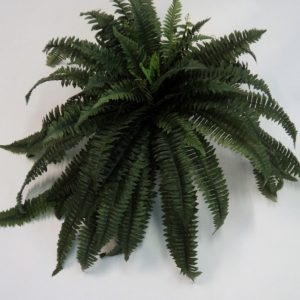 Artificial Boston Fern sml in cane hanging basket with realistic foliage