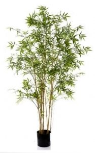 Bamboo Tree Oriental 1.9mt on natural stem