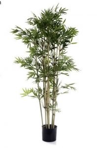 Bamboo Tree 1.2mt Japanese