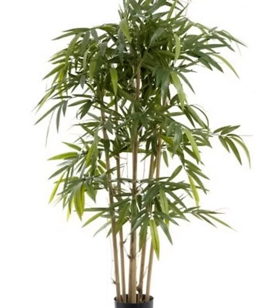 Bamboo Tree 1.5mt on natural stem
