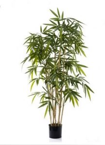Bamboo Tree 1.6mt on natural stem