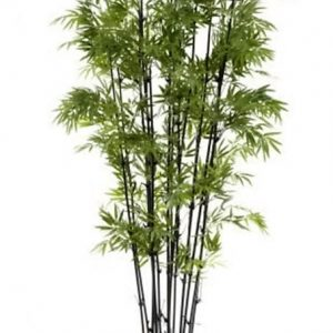 Artificial Bamboo Tree 1.9mt Black on natural Bamboo poles