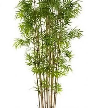 Artificial Bamboo Tree 1.9mt Japanese on natural Bamboo poles