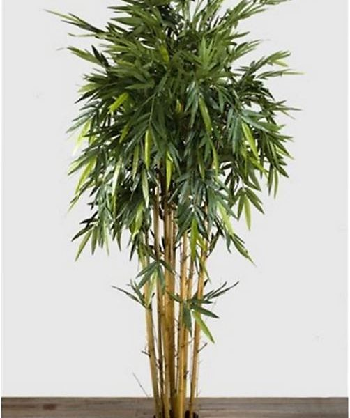 Bamboo Tree 2.2mt on natural stem
