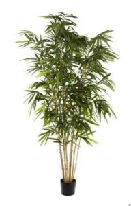 Bamboo Tree 2.4mt