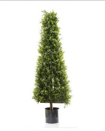 Boxwood Pyramid Tree 1.15mt