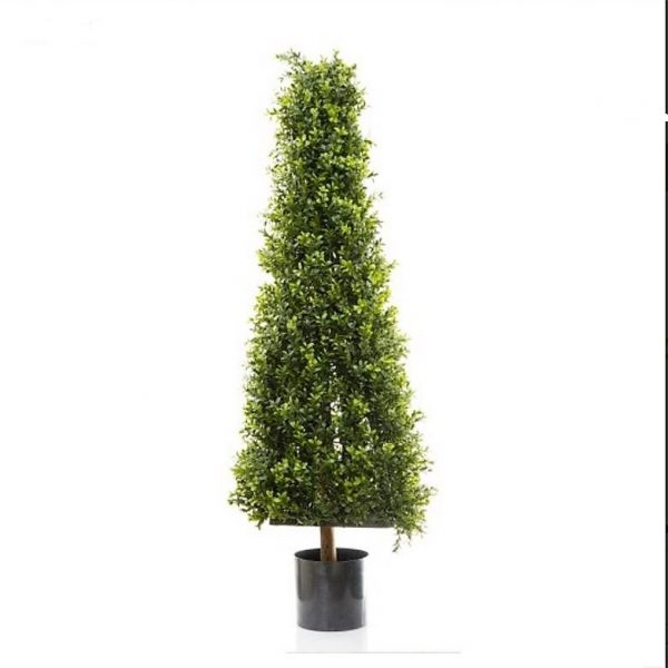 Boxwood Pyramid Tree 1.15mt