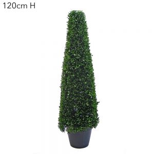 Boxwood Pyramid Tree 1.2mt
