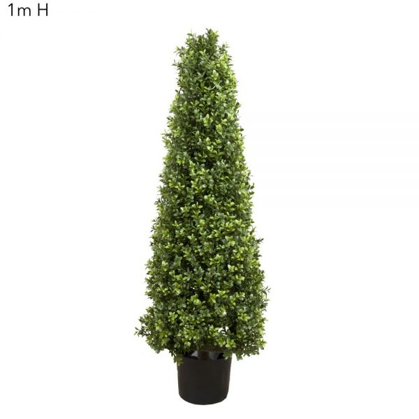 Boxwood Pyramid Tree 1mt