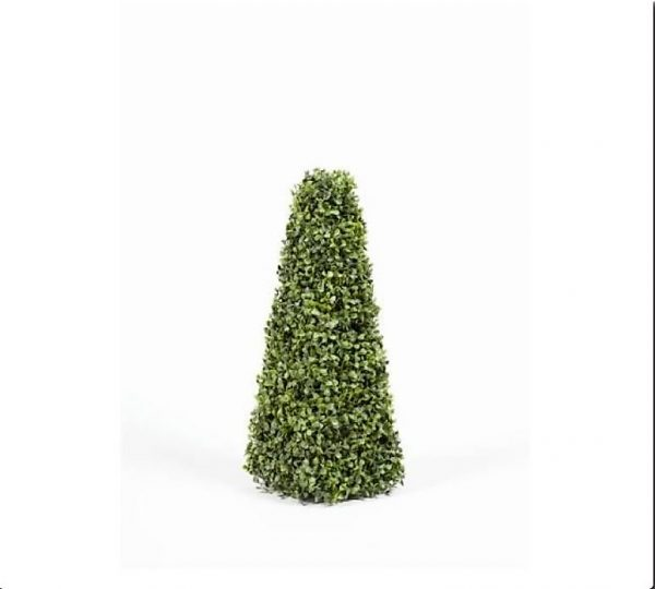 Boxwood Pyramid Tree 60cm