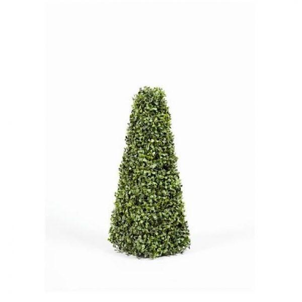 Boxwood Pyramid Tree 60cm