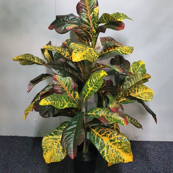 Croton Plant 90cm single