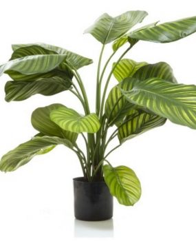 Artificial Calathea Plant 65cm Green with realistic foliage