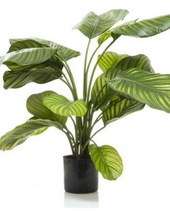Artificial Calathea Plant 65cm Grn