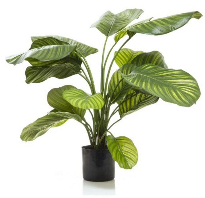 artificial calathea plant 65cm green with realistic foliage silk trees and plants artificial. Black Bedroom Furniture Sets. Home Design Ideas