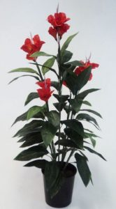 Canna Lily 1.2mt red