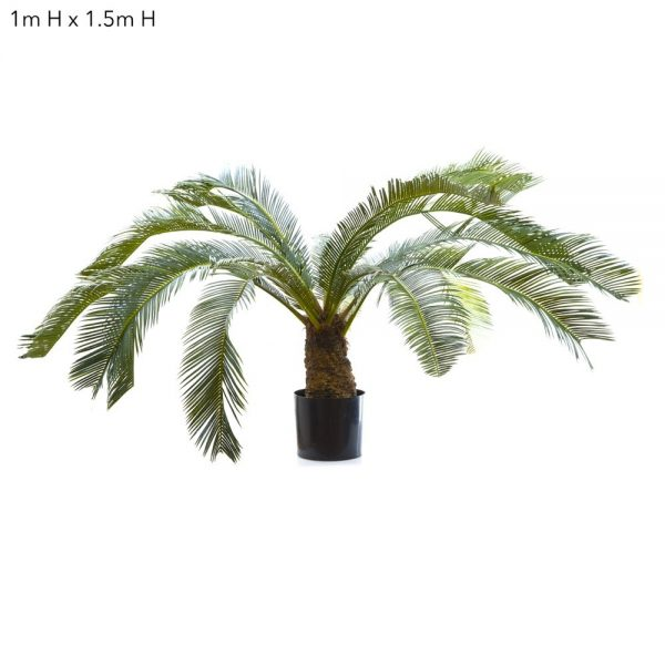 Cycus Palm 1mt