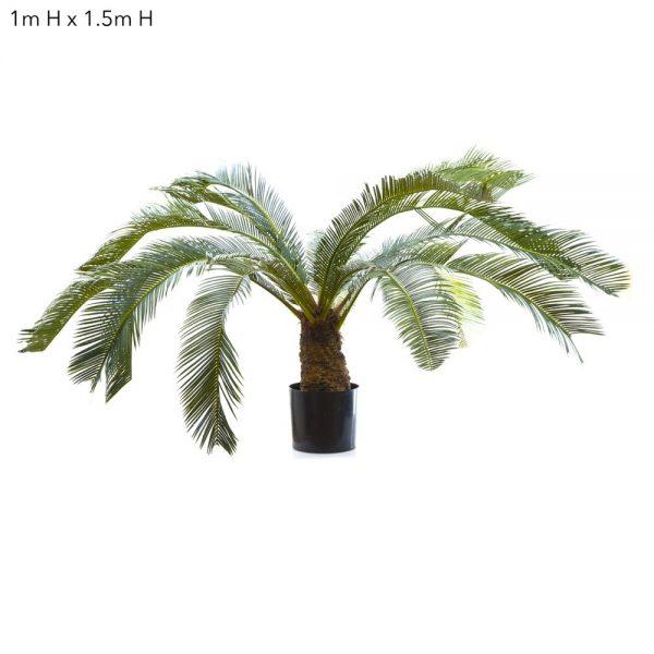 Cycus Palm 1mt