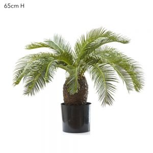Artificial Cycus Palm 65cm with 19 real touch leaves