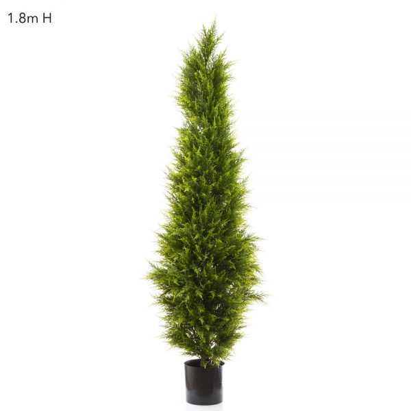 Cypress Pine Tree 1.8mt