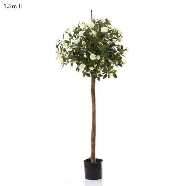 Diamond Rose Ball Tree 1.2m