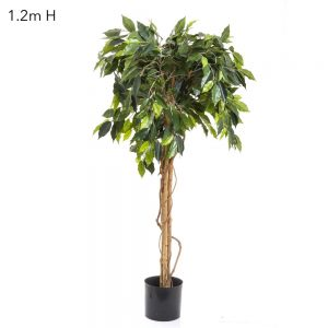 Ficus Ball Tree Topiary 1.2mt