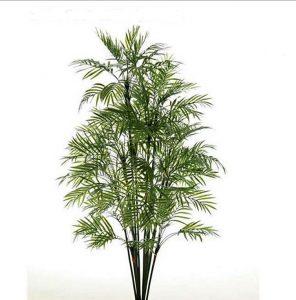 Graceful Palm 120cm