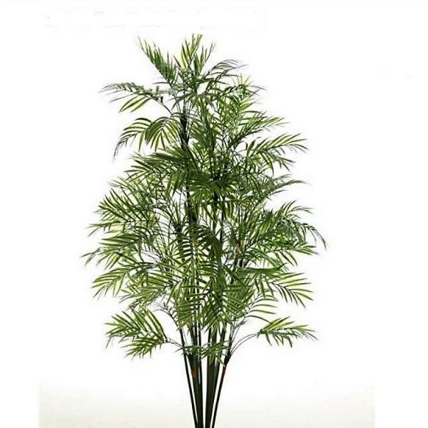 Graceful Palm 120cm