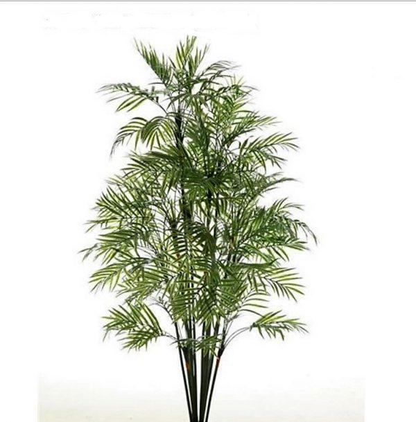 Graceful Palm 1.2mt