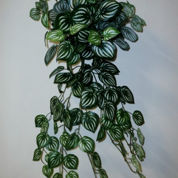 Artificial Peperomia vine in Basket