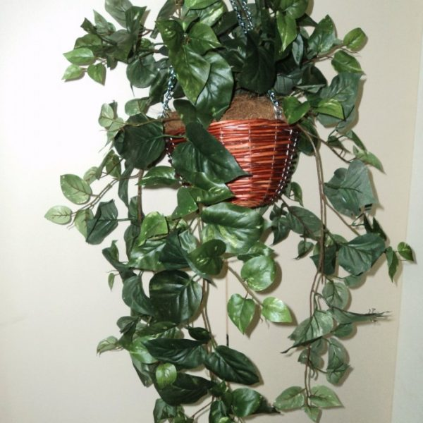 Artificial Pothos Vine in Cane Basket