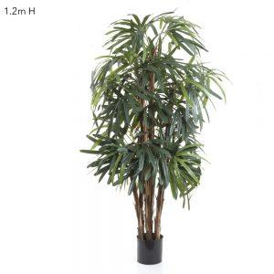 Raphis Palm 1.2m
